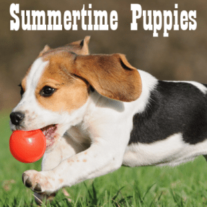 Beth Ostrosky Stern Summertime Puppy Tips & Puppy Treat Recipe