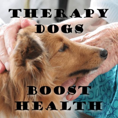 How Therapy Dogs Improve Health & People Animal Connection Program