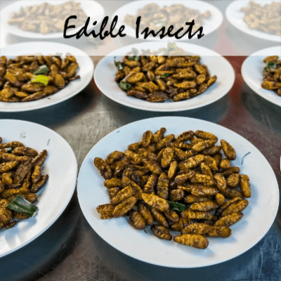 Would you eat insects? I wouldn't recommend it personally, but The Doctors touted the health benefits of a bug-based diet today.