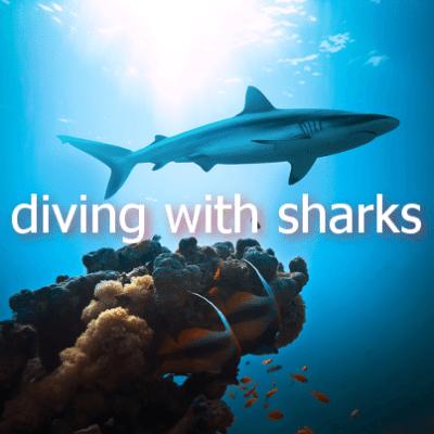 Shark Week: Great White Shark Vs Caribbean Reef Shark & Shark Diving