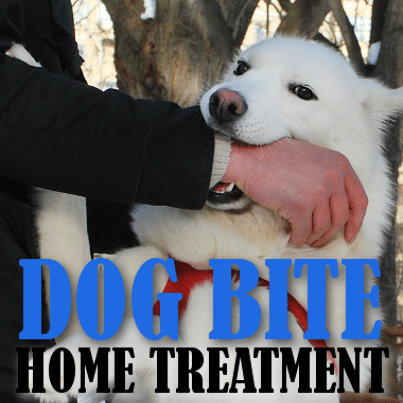 How to Treat a Dog for Rabies foto