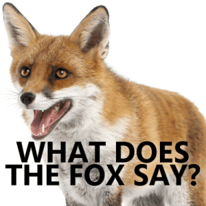 "Kelly & Michael: Ylvis ""The Fox"" & ""What Does The Fox Say?"" Book"