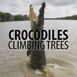 Can Crocodiles Climb Trees & Valentine's Day Tech Greetings