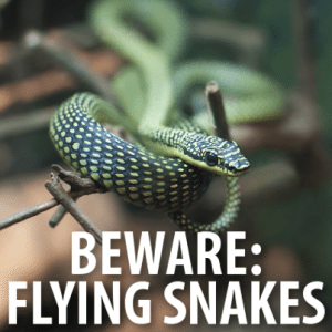 Daylight Saving Time Side Effects, Flying Snakes + Oldest Man Age 112