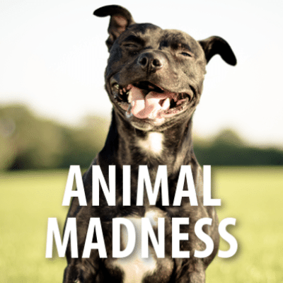 La Roux Performance, 22 Jump Street Directors + Animal Madness Review