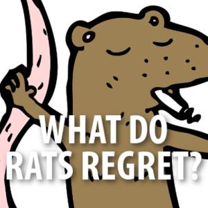 David Letterman: Top 10 Rat Regrets & Tracy Morgan Car Accident