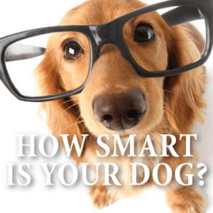60 Minutes: Dogs Oxytocin, Brain Reward Center & Dognition Tests