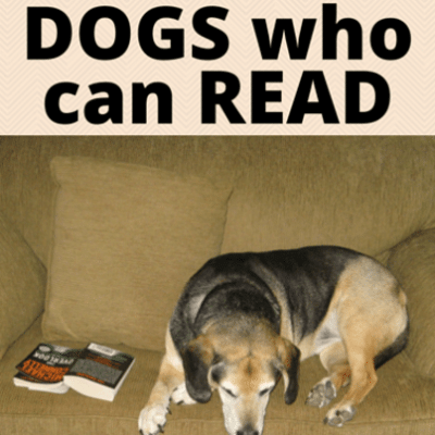 dogs-read-