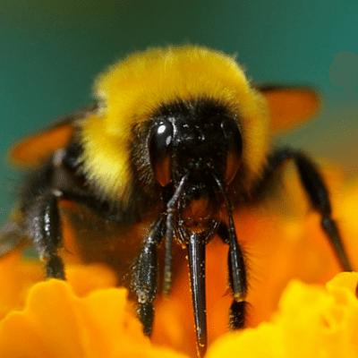 Dr Oz: Should You Try Apple Cider Vinegar, Bee Pollen & Yoga?