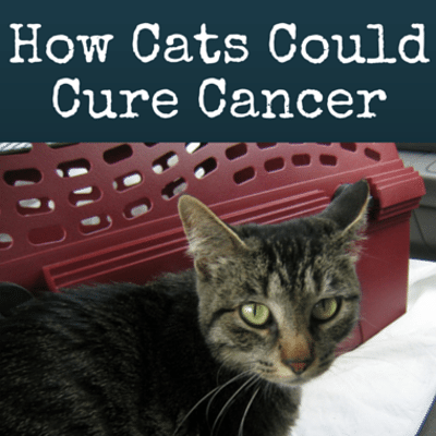 Drs: Cats Helping Cure Cancer + Eating While Driving Dangers