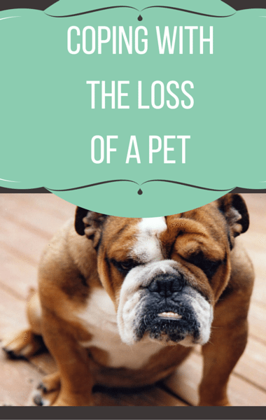 The Drs: Coping With The Loss Of A Pet + Drinks To Fight PMS