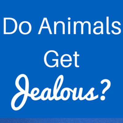 do-animals-get-jealous-