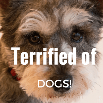 terrified-of-dogs-