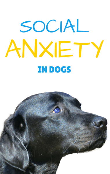 The Drs: Social Anxiety In Dogs + Cancers Thickening Blood