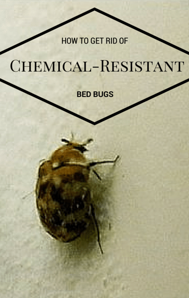 Drs: Getting Rid Of Resistant Bed Bugs + Anti-Aging Celeb Secrets