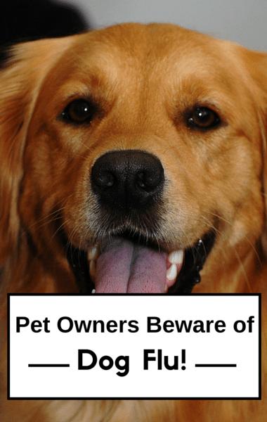 The Doctors: Dog Flu & Robotic Pets + Work Spouse Relationships