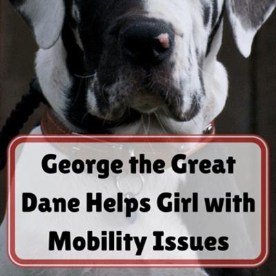 george-great-dane-