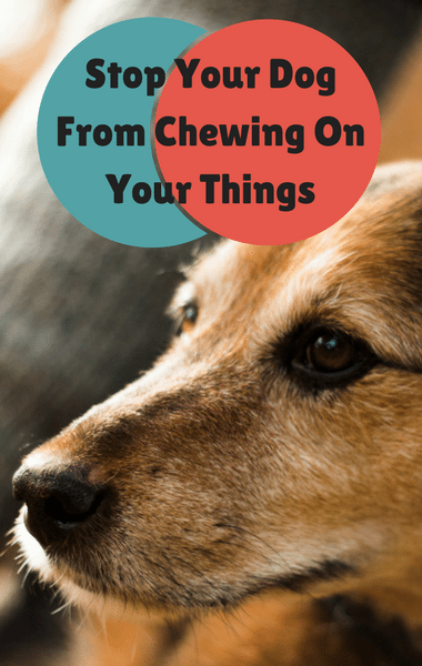 How To Get My Dog To Stop Chewing On Himself